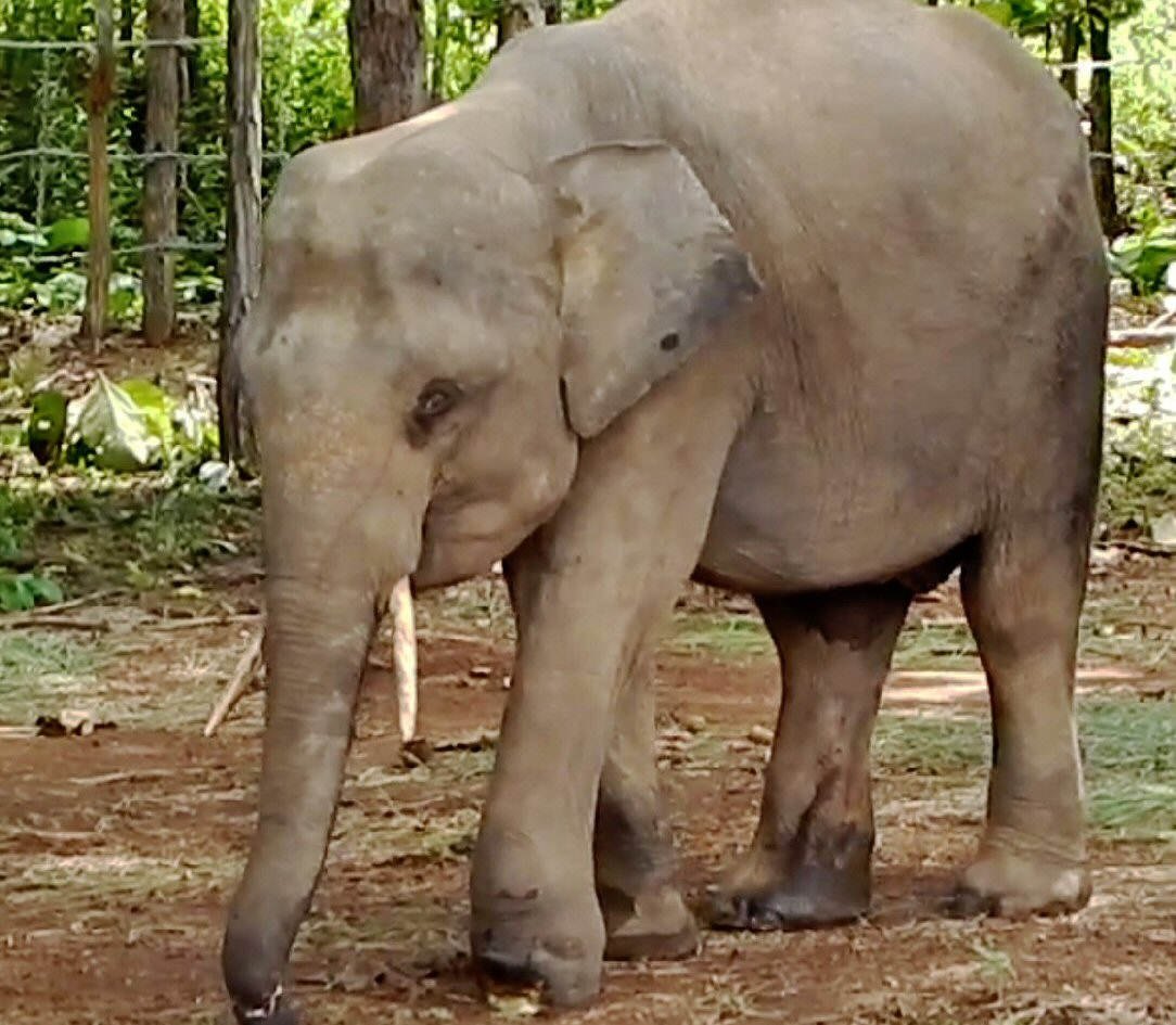 Elephantcare Healthcare Welfare Conservation Of Elephants