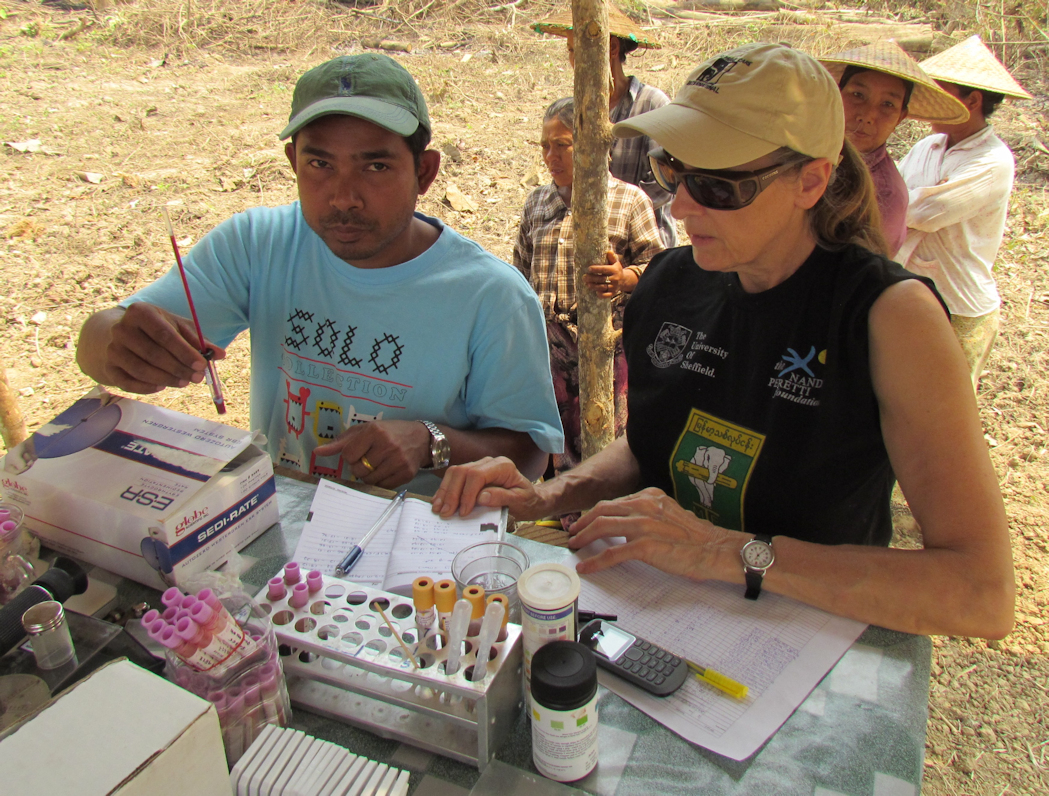 Dr. Htoo Htoo Aung (l) and Dr. Susan Mikota (r) preparing samples for evaluation sedimentation rates (ESR)